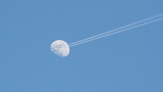 Afternoon Flight (2 of 3) by tdeuel98
