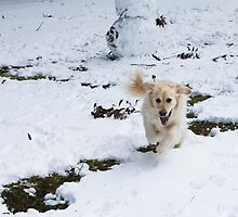 Fun in the snow by Neil