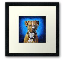 'Angel in Blue' - American Staffordshire Terrier Framed Print