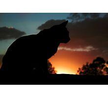 Twilight Cat Photographic Print