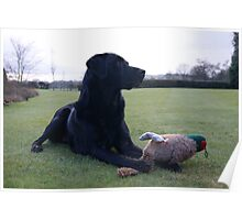 Dog with Toy Pheasant Poster