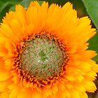 Flower by KatieBird