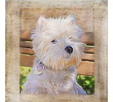 Dog Art - Just One Look Photographic Print