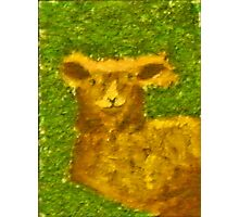 Lamb - Rhian B Photographic Print