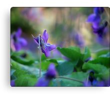 Violets are blue.... Canvas Print