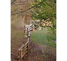 Crooked fence Photographic Print