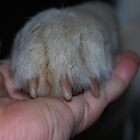 Hand In Hand by thatdogshop