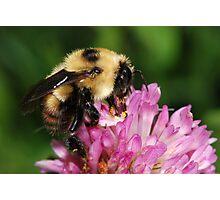 Beautiful HoneyBee Photographic Print