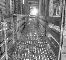 Sheep yards by shaynetwright