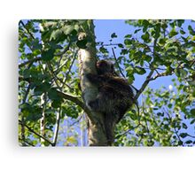 Porcupine up a tree Canvas Print