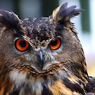Eurasian Eagle Owl Portrait..... by jdmphotography