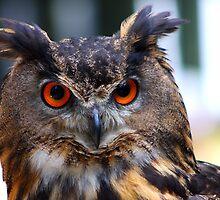 Eurasian Eagle Owl Portrait..... by jdmphotography