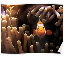 Come and Find Nemo Poster