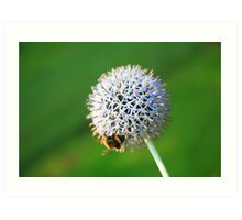 www.lizgarnett.com - Allium with Bumble Bee Art Print
