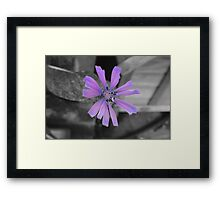 Angels Series - Pink on Black and White  Framed Print