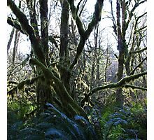 wet forests Photographic Print