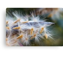 flower in autumn Canvas Print