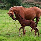 mum by Edward  manley
