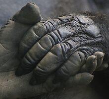Take My Hand by Lori Walton