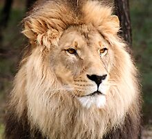 King of Pride by Paul Jeston