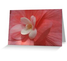 Begonia in Soft Shades of Red Greeting Card
