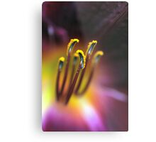 Pollen Explosion  (Day Lily) Metal Print