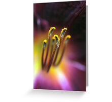Pollen Explosion  (Day Lily) Greeting Card