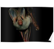 GHOST BAT Poster