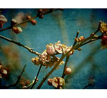 Over before it began Photographic Print
