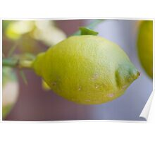 lemon on tree Poster