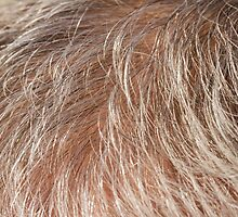 detail of the scalp by spetenfia