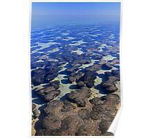 Hamelin Pool, Shark Bay Poster