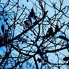 Winter Blues by Paulus Tanudjaja