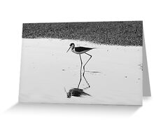 Graceful Feeder Greeting Card