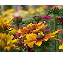 Meadow planting Photographic Print