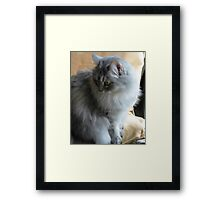 Reflections in the Morning © Framed Print