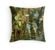Dragonflys Throw Pillow