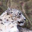 Snow Leopard by TerraChild