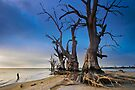Lake Bonney - Early Morning by KathyT