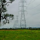 Line of Pylons on Ash Island NSW by Phil Woodman