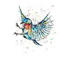 Flying Bird Photographic Print