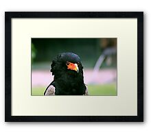 Bateleur Eagle #2 Framed Print