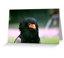 Bateleur Eagle #2 Greeting Card