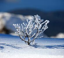 Winter on Mt Wellington, Tasmania 2 by David Jamrozik
