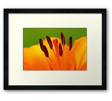 Stamen of the Lily Framed Print