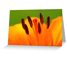 Stamen of the Lily Greeting Card