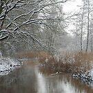 Winter in my backyard by Arie Koene