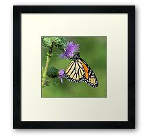 Monarch on a Thistle Framed Print