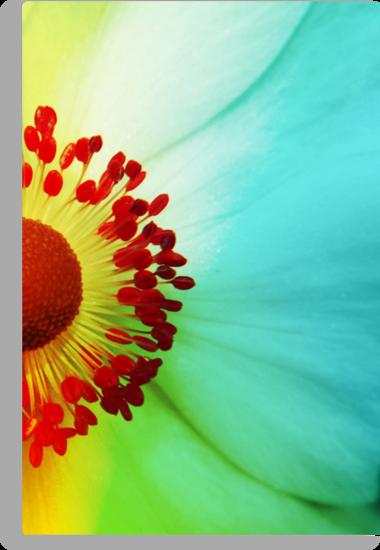 Colour Wheel by Stephanie Hillson