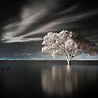 Tree in Water by Ben Ryan